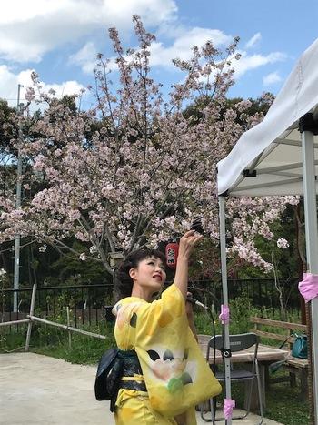 花いちばん桜まつり