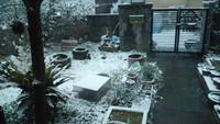 「先日の雪の日」