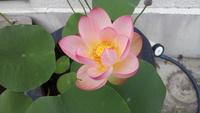 「黒江の景観協定(黒江JAPAN)の総会・懇親会の開催」