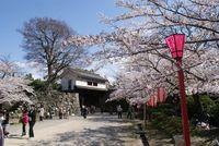和歌山城 桜2012