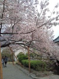 和歌山でゆずり葉上映されました