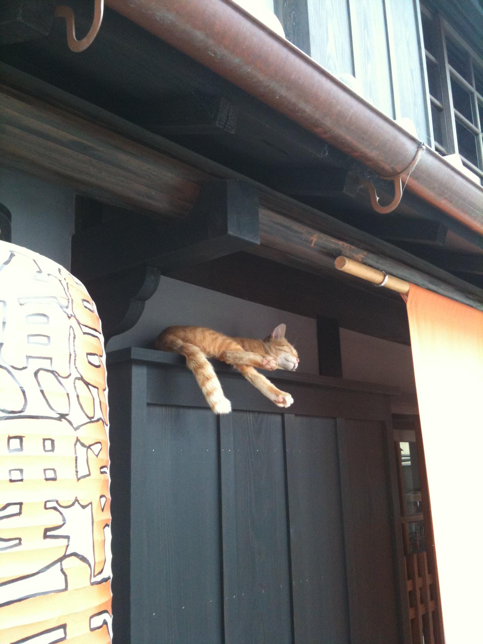 リアル招き猫がやってきました