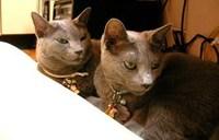 猫カフェ工事中
