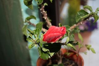 かわいい花たち(*^_^*)