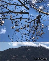 今週はお篭りウィーク。そして桜の開花