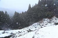 熊野古道 冬景色