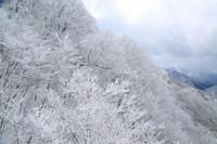 高野龍神スカイライン 樹氷