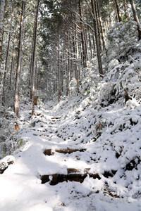 熊野古道 冬景色2