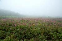 霧の伊吹山