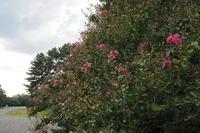 京都御所 九条邸跡