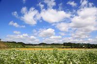奈良 笠の蕎麦畑