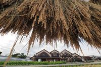 吉村酒造 酒蔵とお庭