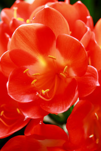 咲いた咲いた 赤白黄色