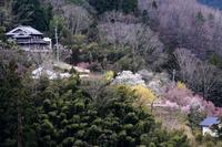 西吉野 花木の郷