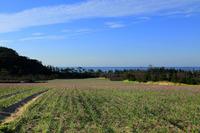 鳥取旅行 ラッキョウ畑