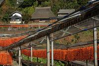 串柿の郷 四郷