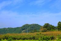 鳥取旅行 柿狩り