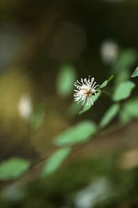 神倉神社の野草たち
