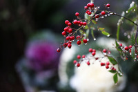 ともちゃんちのちっちゃなお庭のお正月
