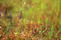 上野森林公園 水辺の植物