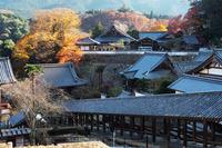 奈良ツアー 長谷寺