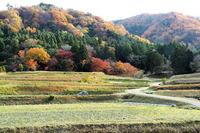 晩秋の京都 修学院離宮