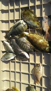 9月21日・・・釣り釣果…速報