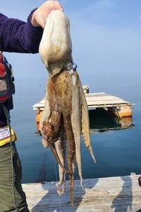 5月8日・・・釣り釣果(再更新…3kgのタコ)