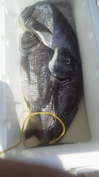 8月19日・・・釣り釣果