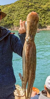 5月3日・・・釣り釣果(再々更新)タコの写真届きました