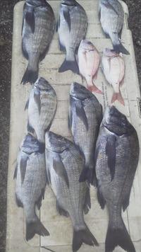 10月16日・・・釣り釣果