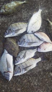 10月14日・・・釣り釣果