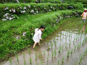 6月27日、草取り体験を実施しました