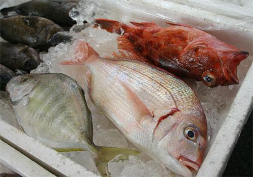 獲れたて魚がお買い得です!
