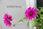 花のとしちゃん