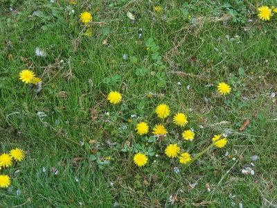 花の季節です!