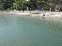 潮の満ちた干潟に浮遊する生物