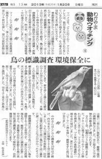 102 鳥の標識調査