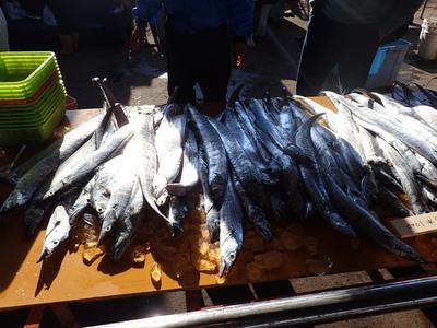 タチウオ日本一の箕島漁港で「朝市」が開催されます!