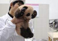 パンダの赤ちゃんの名前が決まりました!