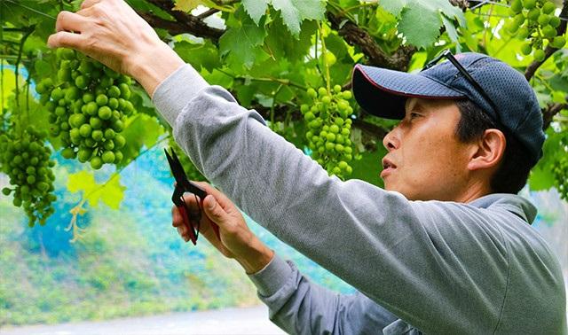 和歌山県クラウドファンディング活用支援対象事業に「ブドウの早摘み果汁から出来た『ピオーネのしずく』」新たに認定!