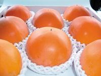 柿の王様「温室新秋柿」をふるさと納税でお送りします