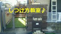 しつけ方教室☆