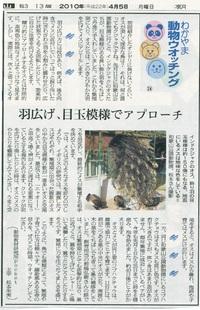 24 クジャクの羽色
