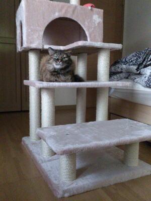 障害猫 アリス