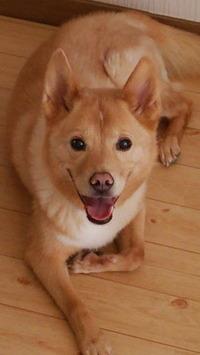 愛犬キロさん