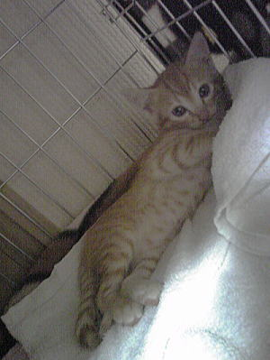 飼い主さま募集中~仔猫ちゃん。