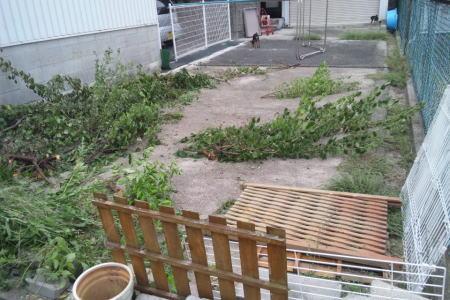 家庭菜園を目指して!