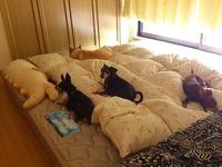 理想の寝室