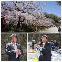 桜、満開です!